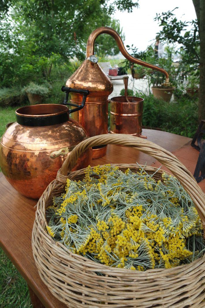 Immersion Féminin Sacré distillation plantes médicinale alchimiste sorcière