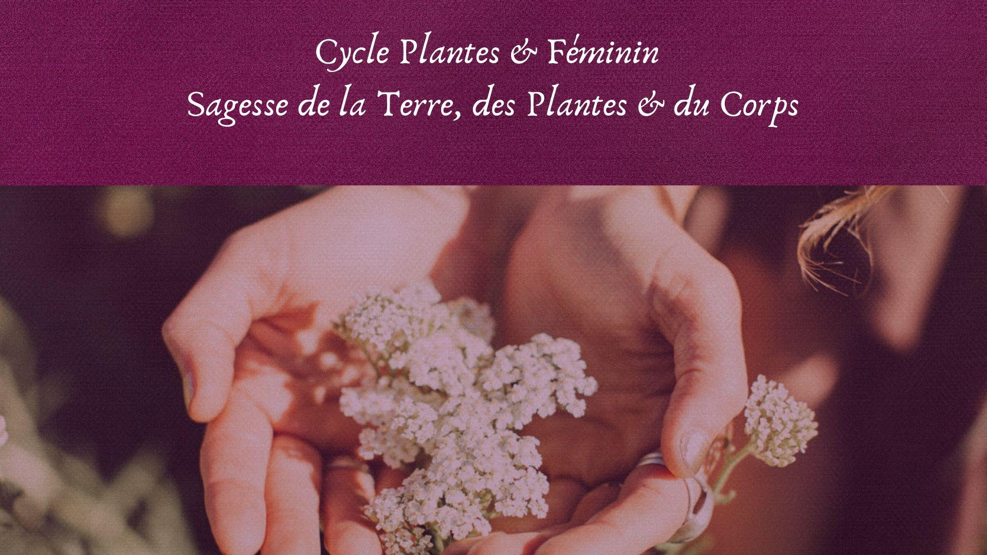 plantes médicinales féminin, cycle menstruel, santé hormonale holistique